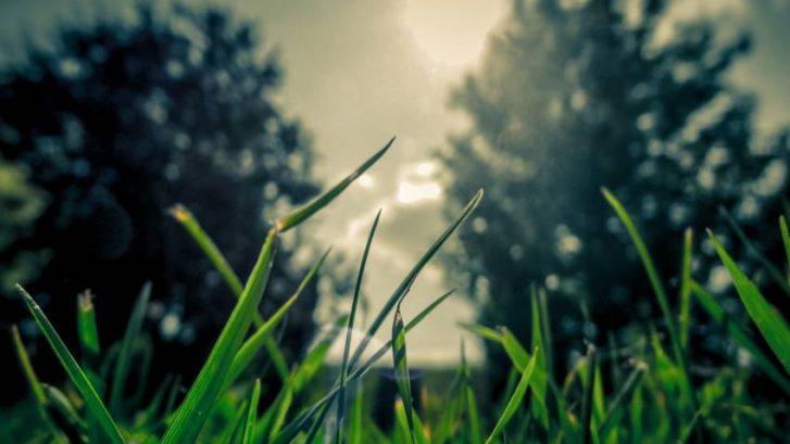 Jaglac-Primula-vulgaris–snažan-ekspektorans-ayurveda-nutricionizam